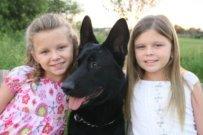 German Shepherds With Kids