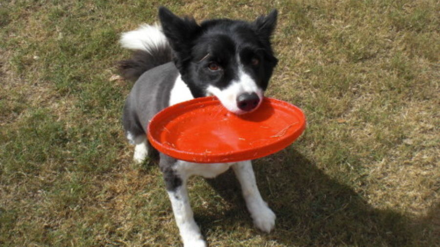 frisbee Training