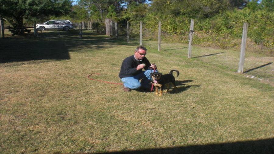 Rottweiler Puppy Training- Puppy Training for Beginners