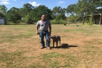 Teaching Pit Bull Owners, How To Train Their Dog. And What They Need To Learn.