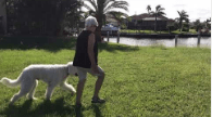 3 1/2-year-old golden doodle obedience training