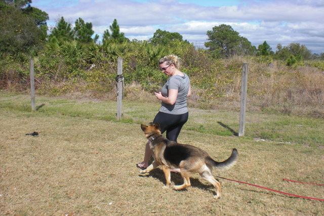 German Shepherd training course